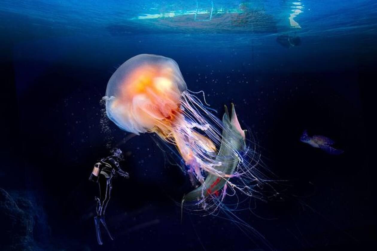 medousa delfini klimatiki allagi