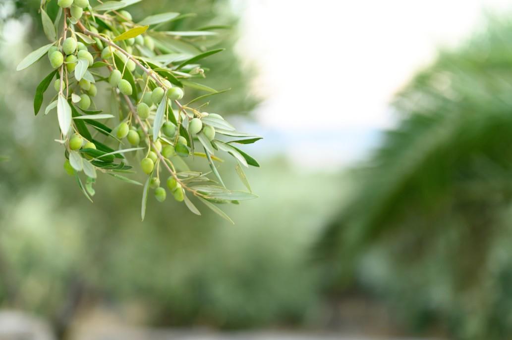 μαγειρεμένο λάδι δέντρο